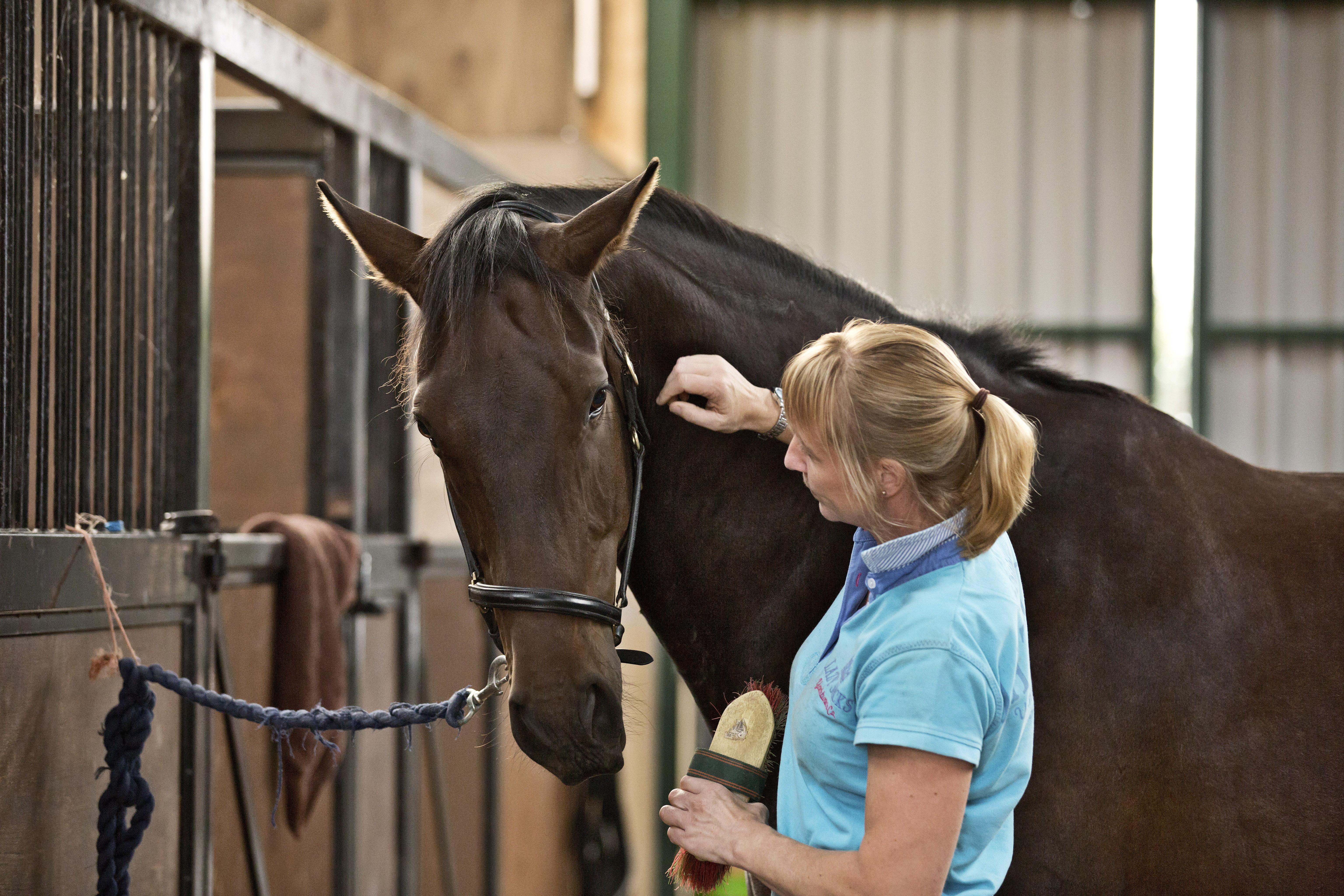 holistic horsemanship trainng