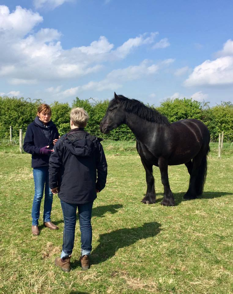 equine assisted therapy session