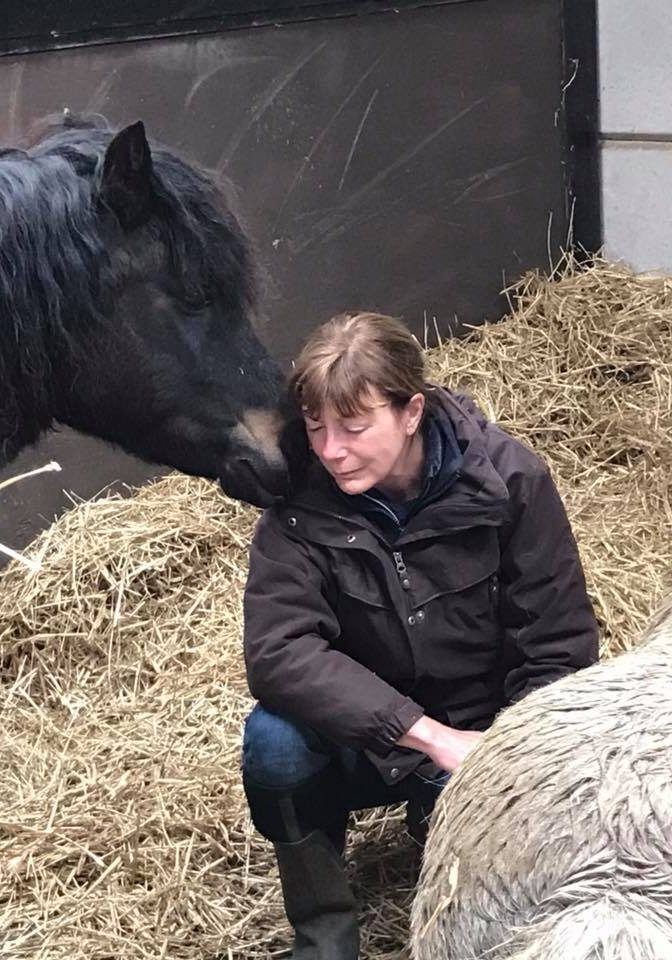 equine assisted therapy with adult client